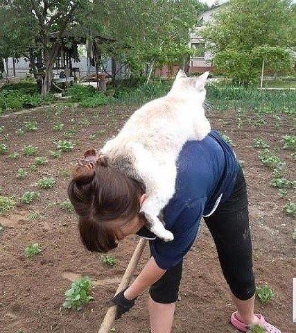 Хозяйка, я с тобой#кот #дозор #Огород #дачный_сезон #помощник #cat #домашние_любимцы #животные #на_шее