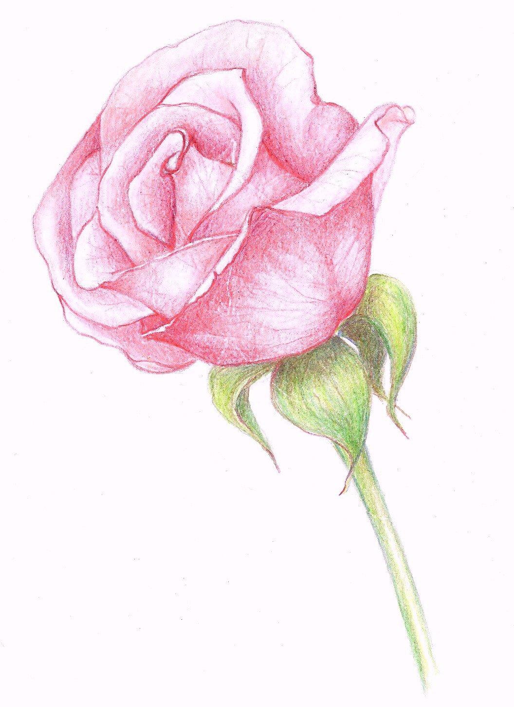 сибири рисунки розочки красивые помните, что вам