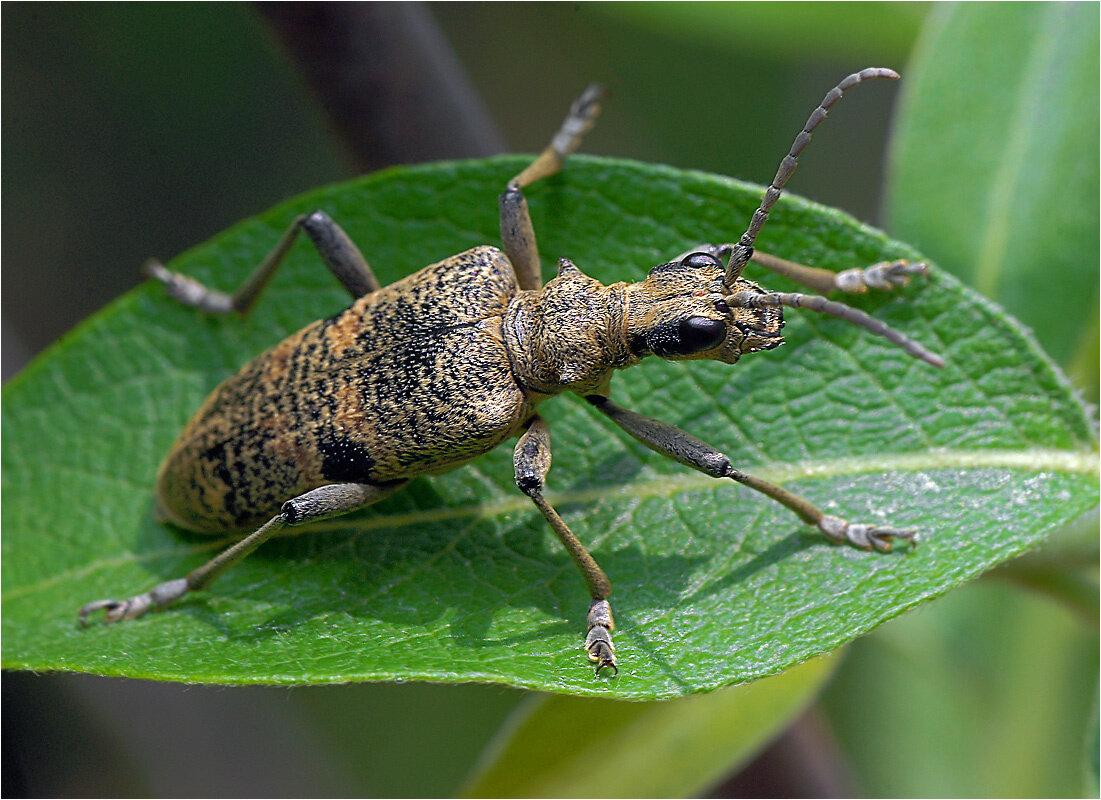 Зеленый майский жук фото смешные