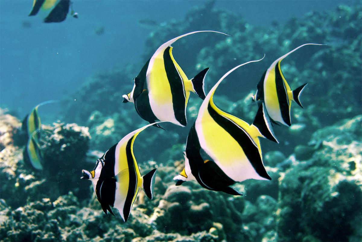 Рыбка картинки красивые, днем