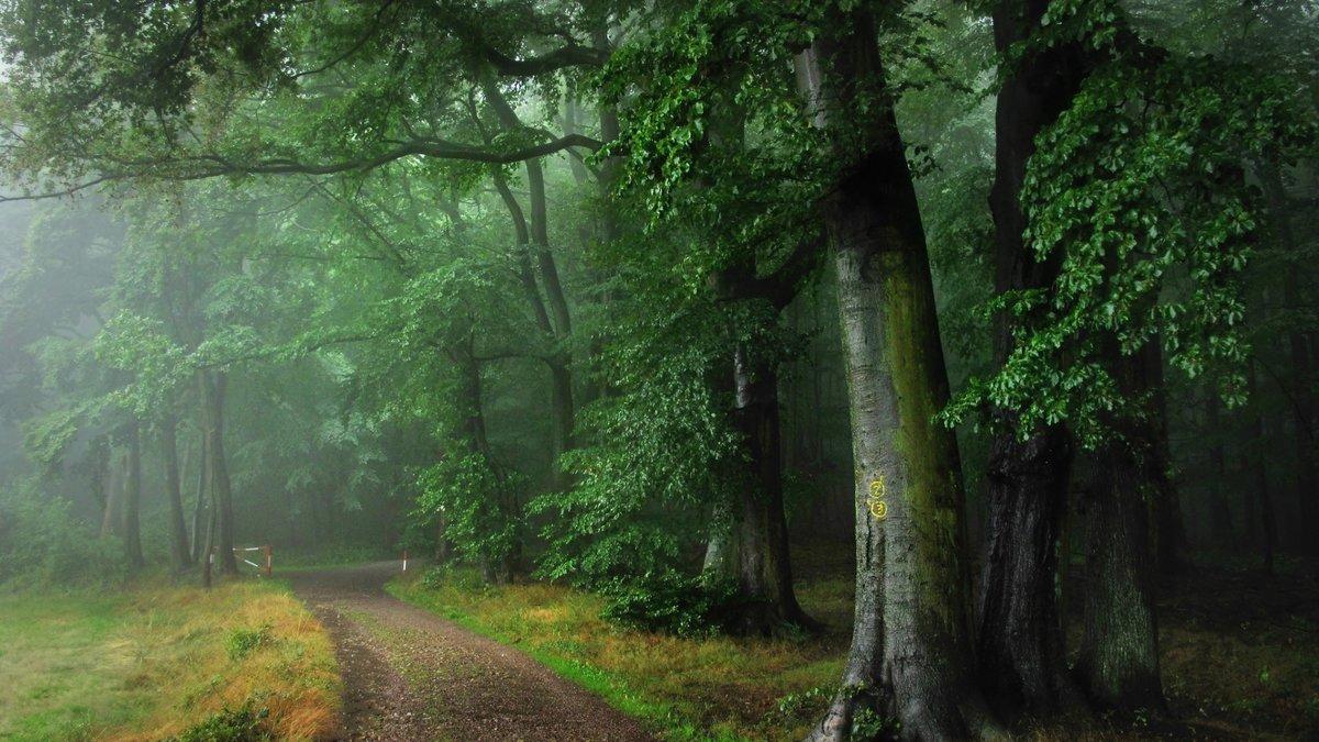 живой дождь в лесу обои и картинки масса шикарные залы