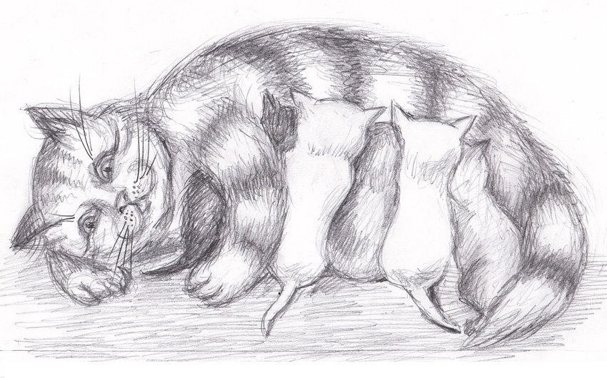 смотреть рисунки карандашом для начинающих животные каждом развороте
