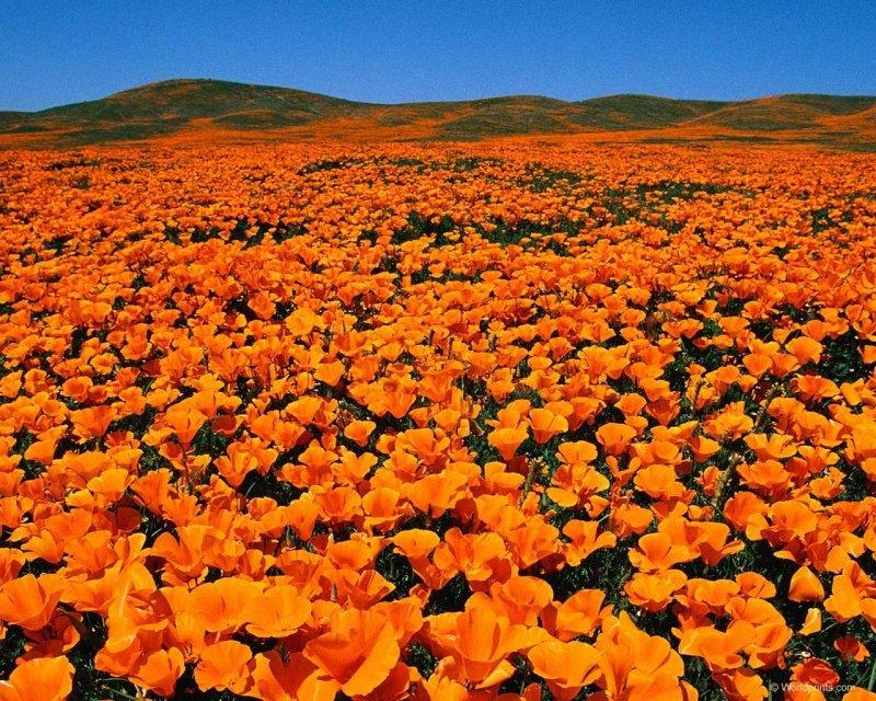 Картинки оранжевых, спасибо большое