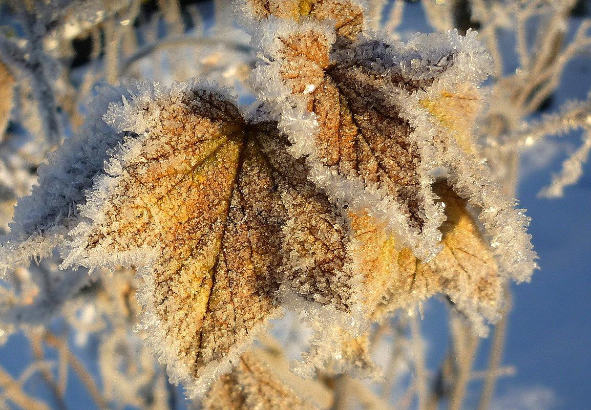 фото картинки осени с изморозью на рабочий серии цихлиды