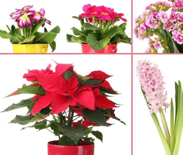 Цветущие цветы в картинках с названием