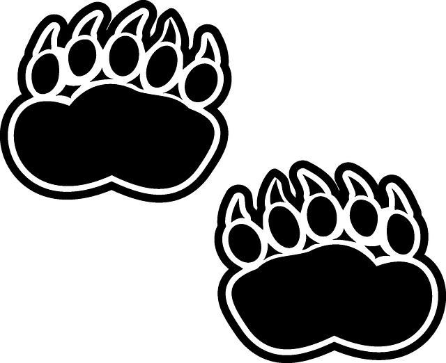 Картинки следы медведя
