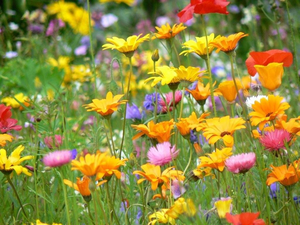 Сделать бантик, цветочная поляна картинки анимации