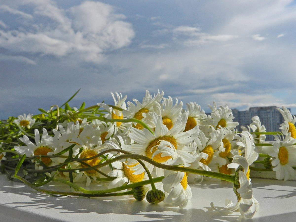 Картинка с надписью и цветами все цветы мира для тебя