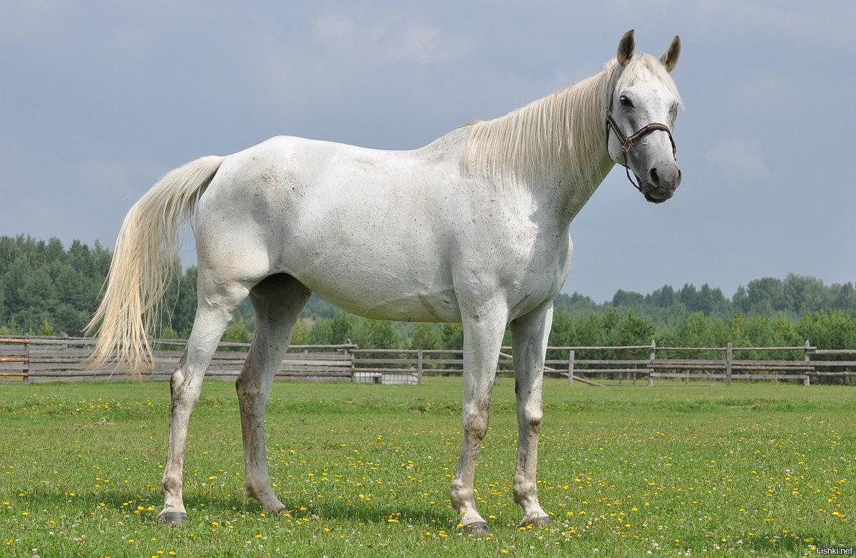 Вместе, лошади фото красивые картинки с надписями какая порода