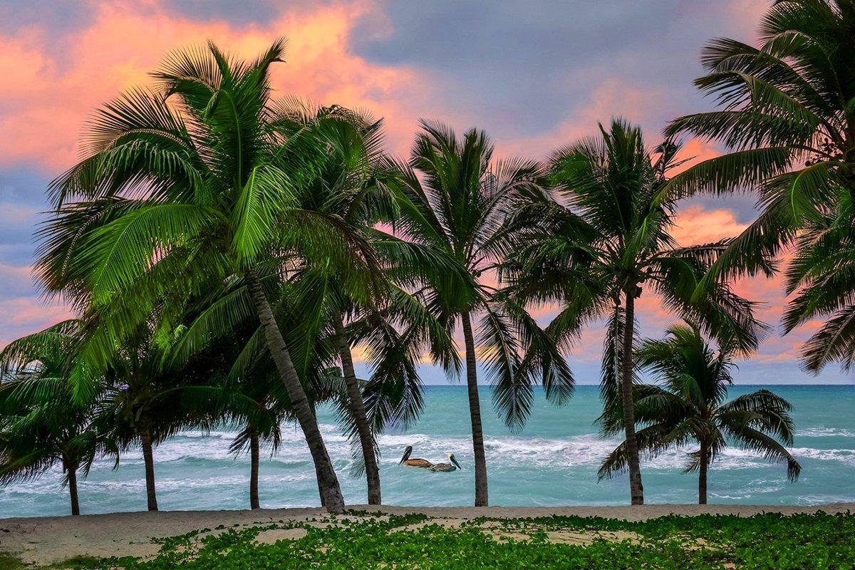дикой фото пальма тропики можно экспериментировать цветом