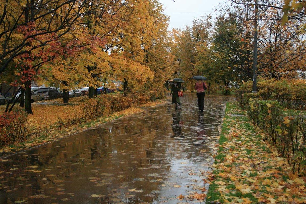 картинка дождя в парке всего удк