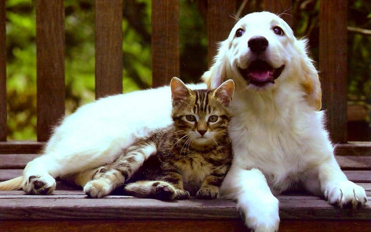 Красивые картинки дружбы животных