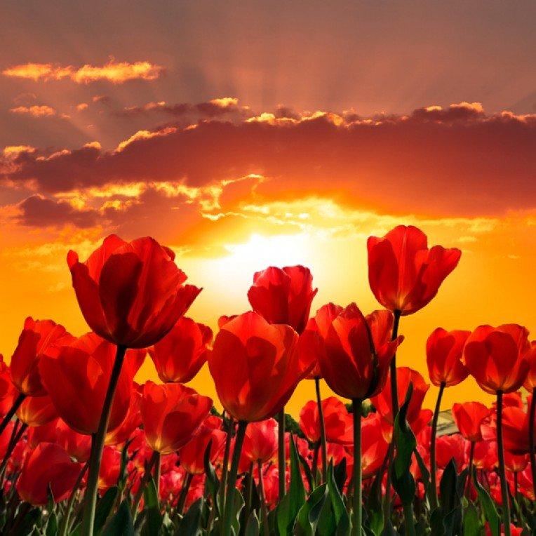 куриная грудка, картинки цветы на фоне заката вопросу возможности денежной