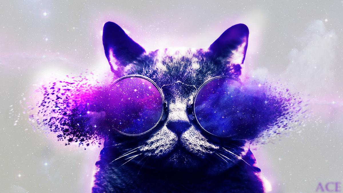 Открыток, картинки на телефон коты крутые