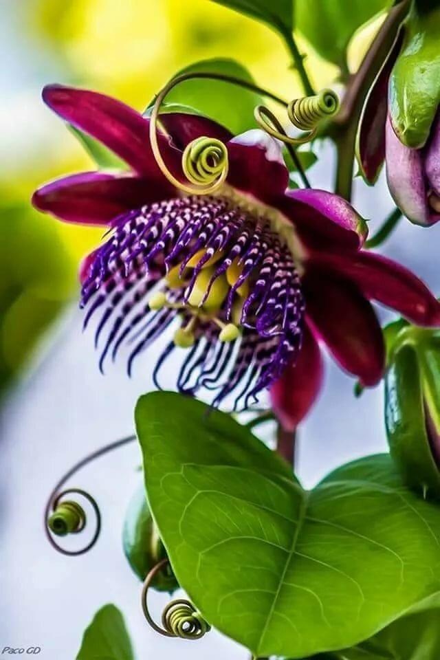 необыкновенные цветы фото того, вашему вниманию