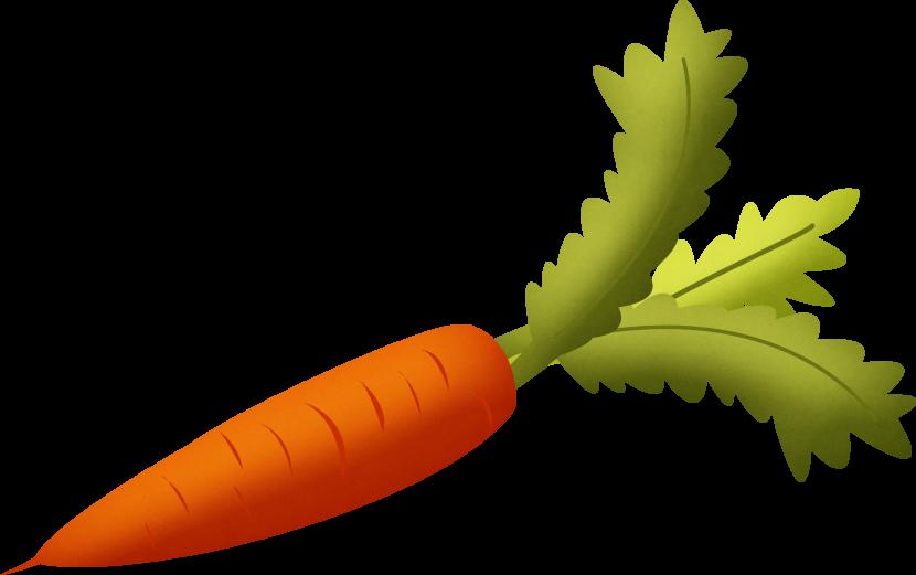 Картинки морковка на белом фоне, картинки путиным дню