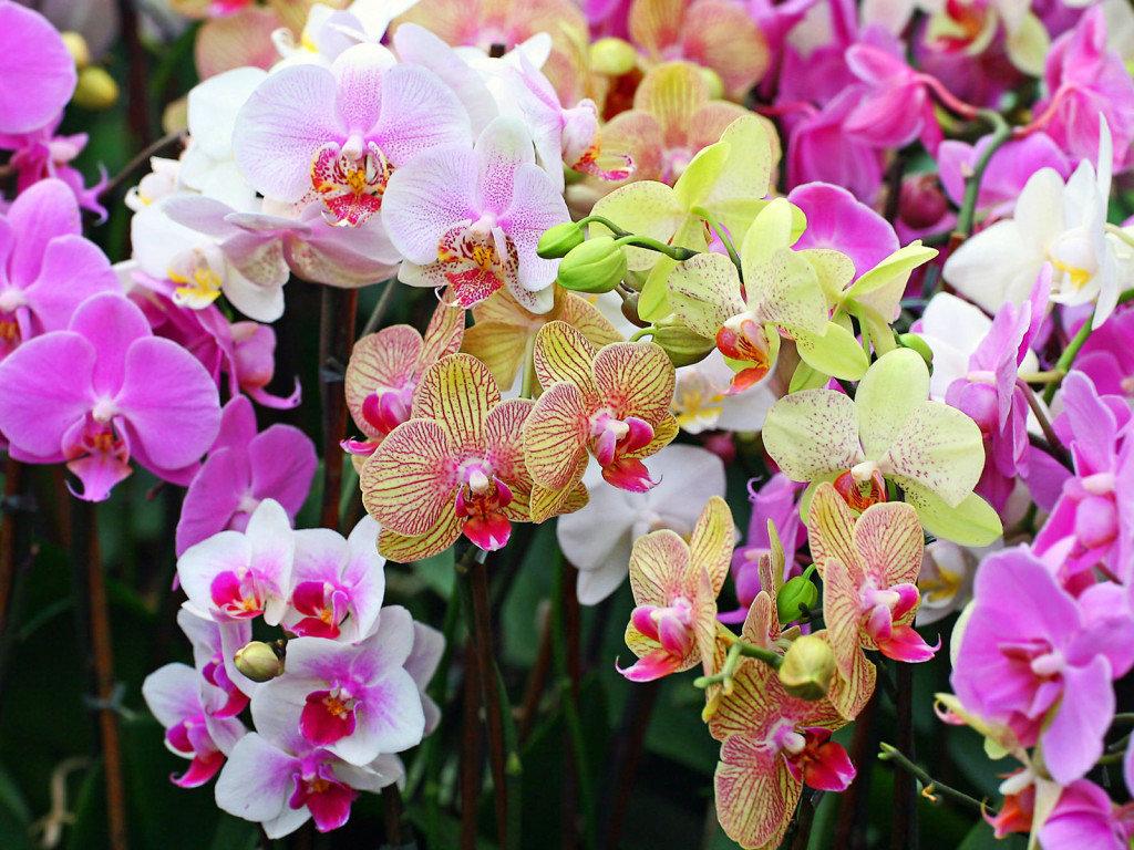 Орхидея картинки красивые, открытки днем рождения