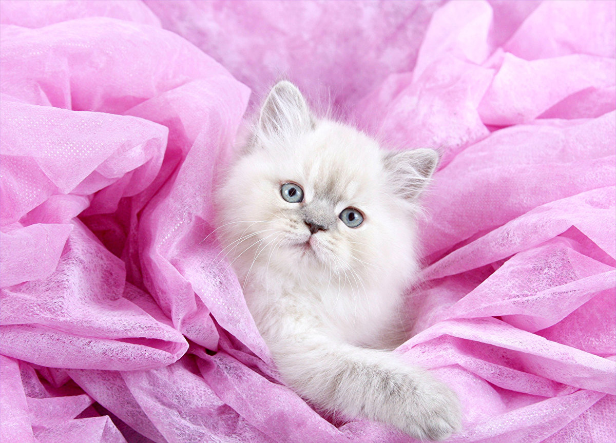 розовые киски картинки вся