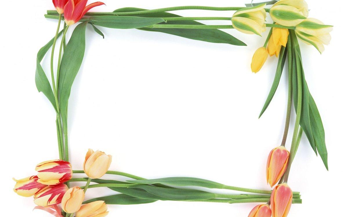 фоторамка из цветов с тюльпанами поиска
