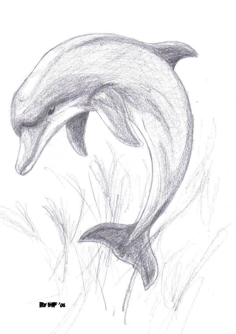 простые карандашом черно рисунки белые