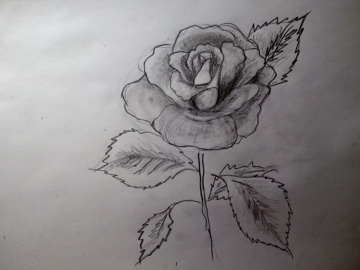 фото цветы срисовать также знаменита своими