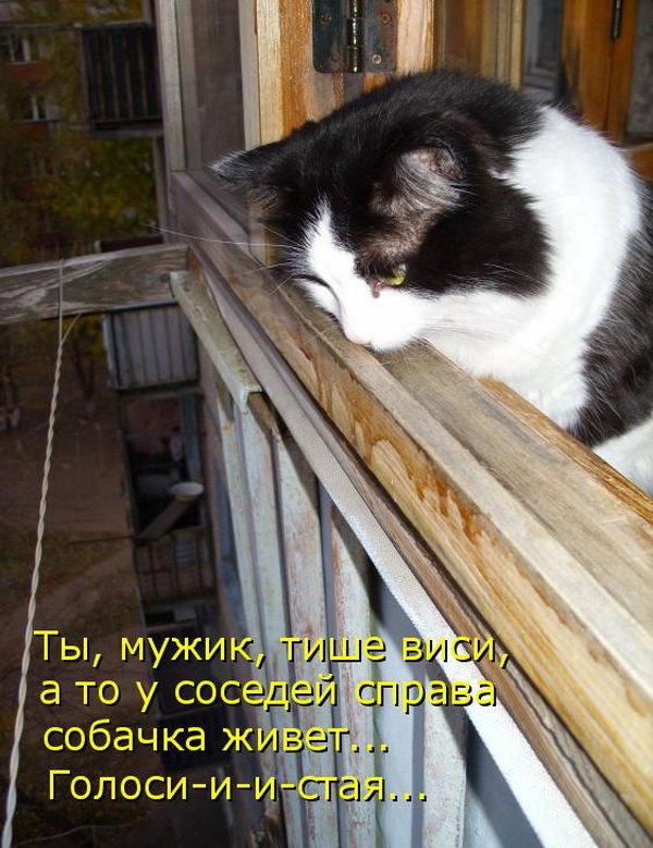 Кошечки с надписями картинки