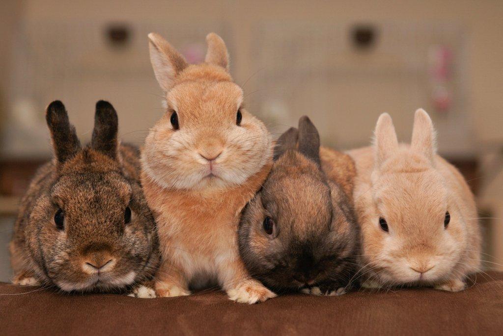 самая картинки одинаковых кроликов каре