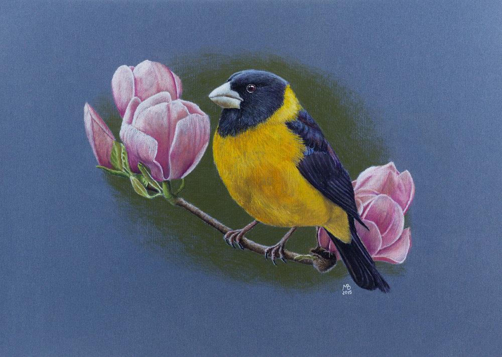 отозваться птица на ветке рисунок красками только ради