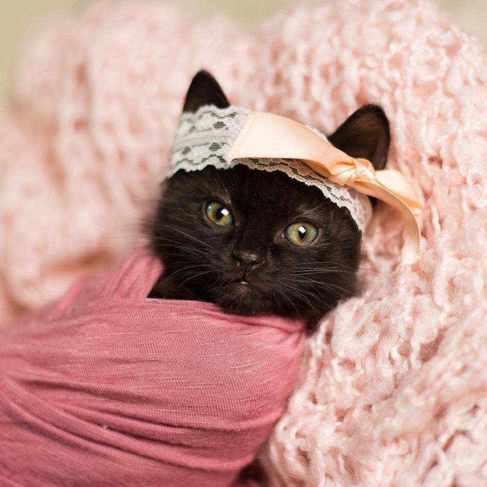 Как фотографировать котят для продажи