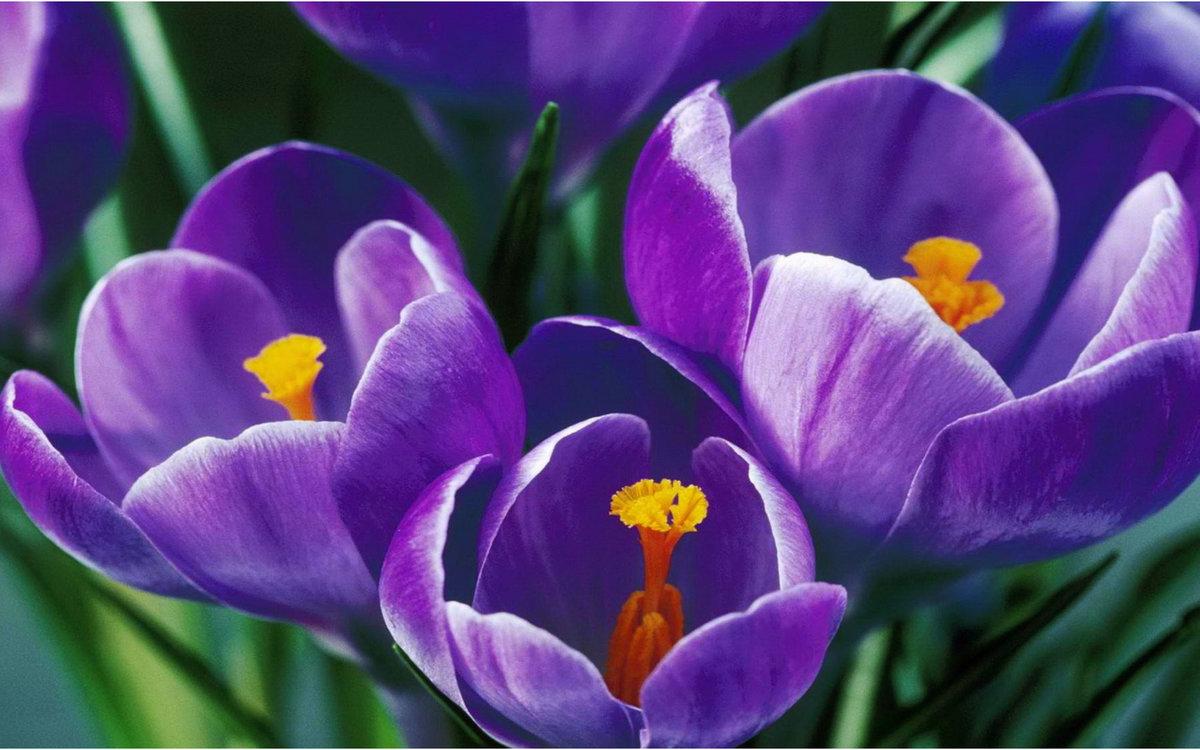 Открытки, красивые картинки фото цветы