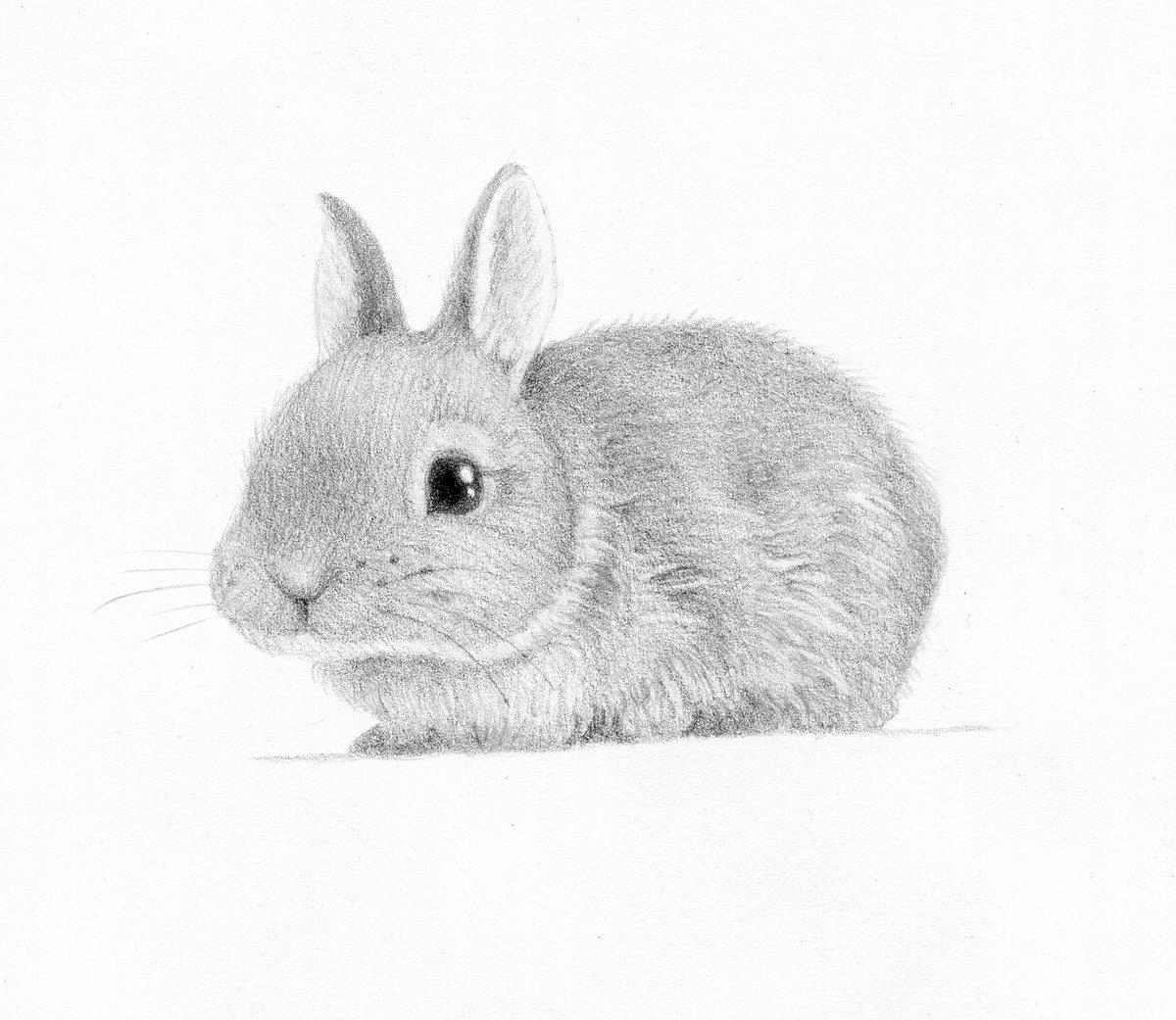 Животные карандашом картинки для детей