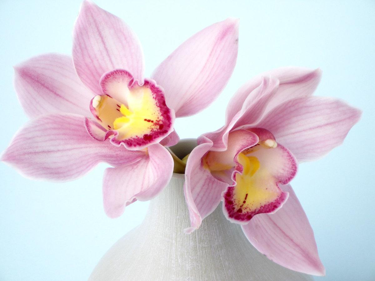 Красивые орхидеи открытки, днем рождения