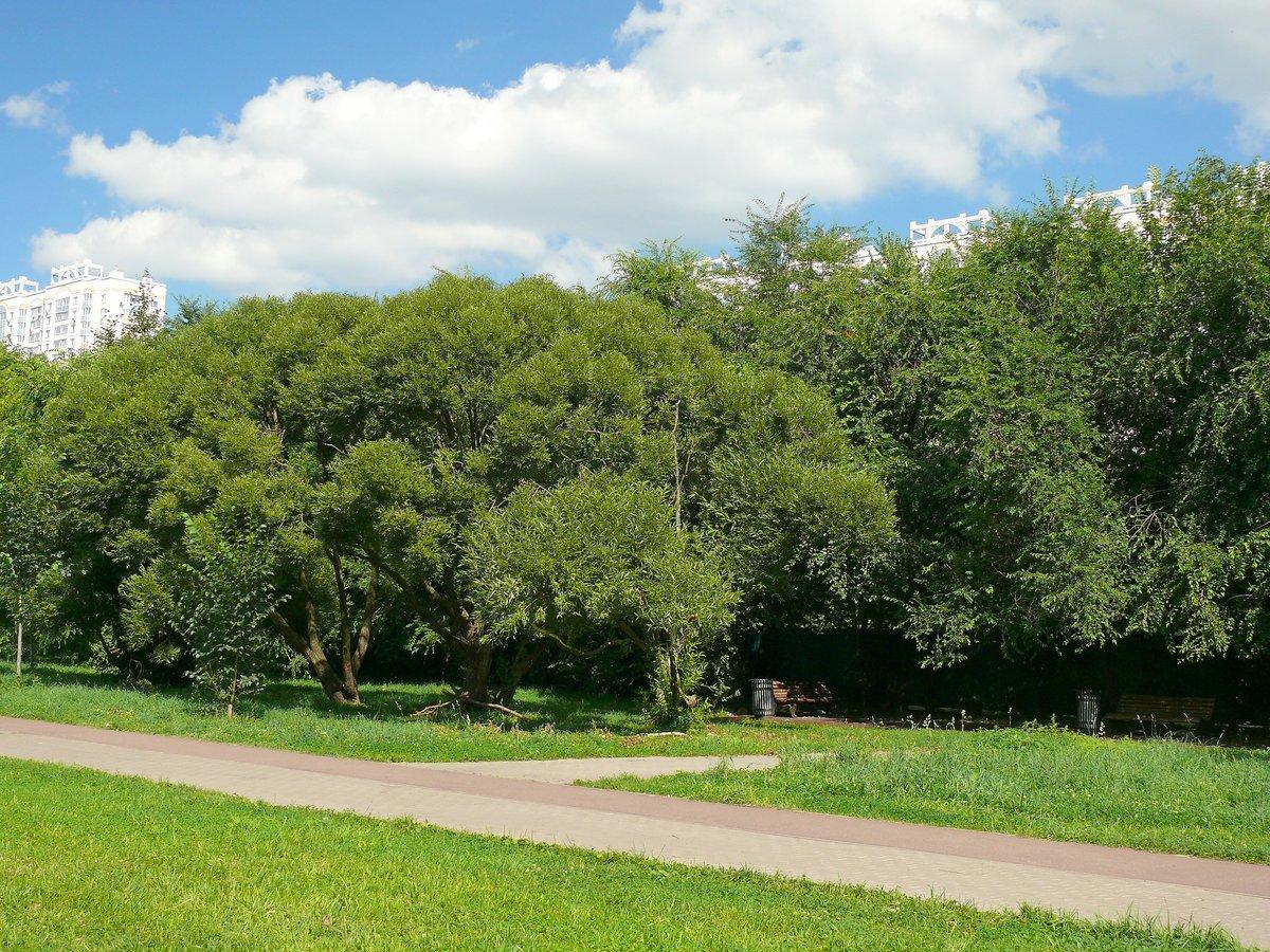 д фото волжский бульвар сайт смешанного леса