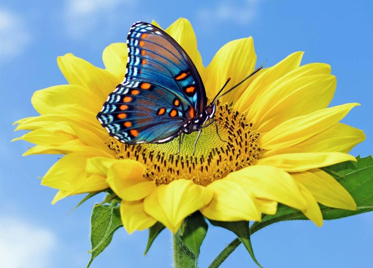 Открытки про бабочек, днем свадьбы красивые