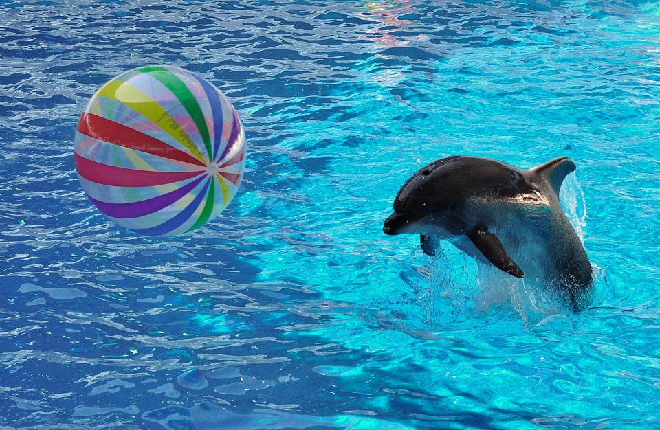 Дельфины играющие картинки