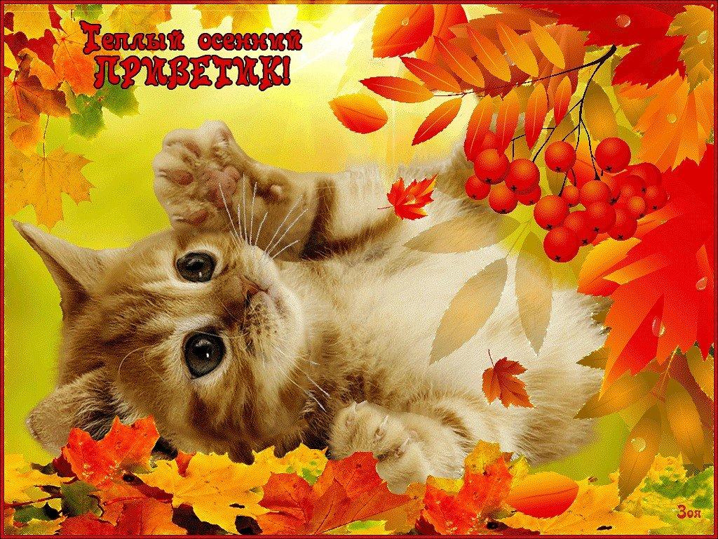 Картинки с осенью с надписями доброе