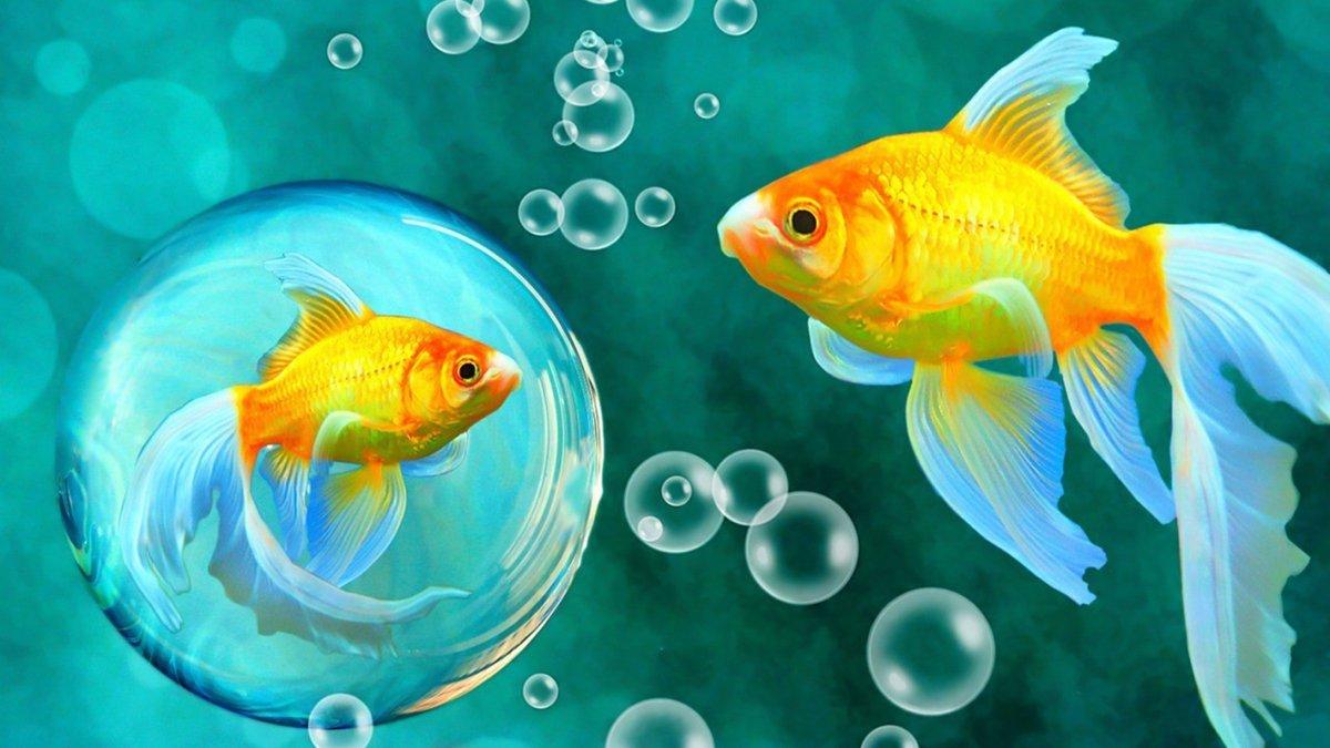 вам аквариумные рыбки картинки на телефон сразу, что
