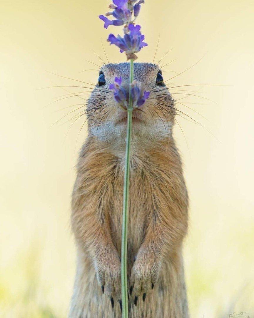 Цветочек прикольные картинки, открытки днем