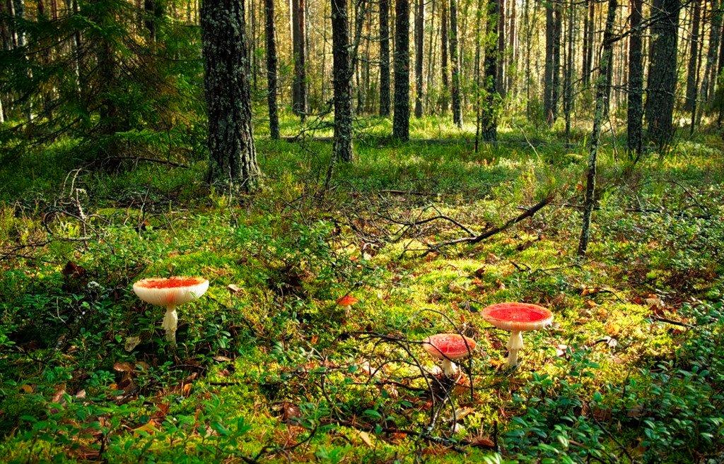 Картинки грибная поляна для детей
