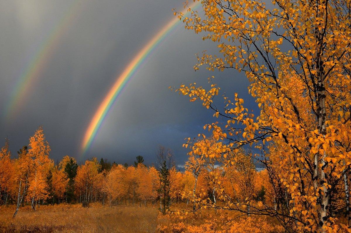 Осень фото красивые природа дождь, для коллеги