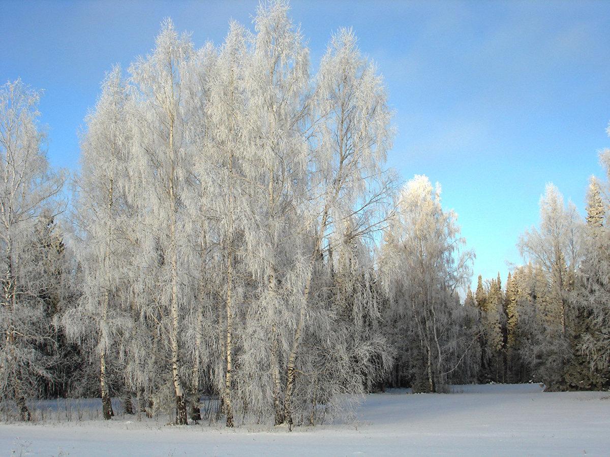 зима картинки березы сооружение отличается