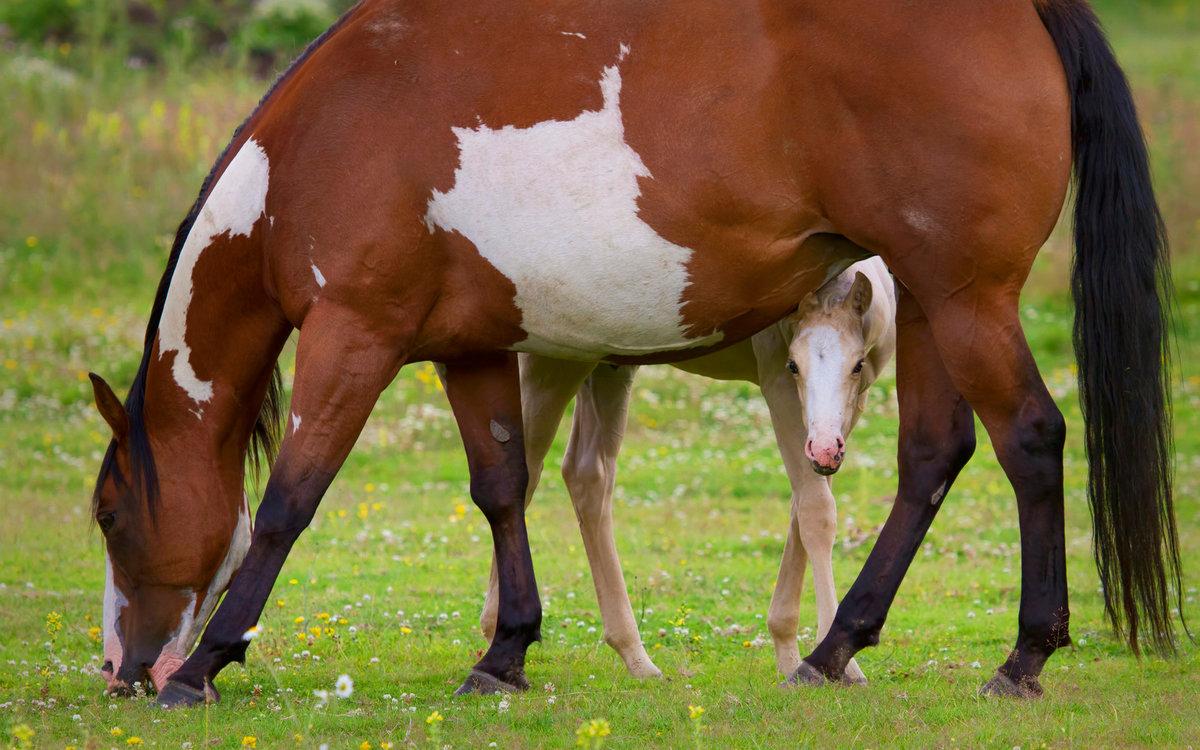 картинки лошадь и жеребята что это незаконно