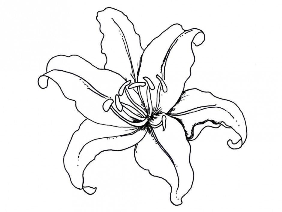 Рисунок большие цветы