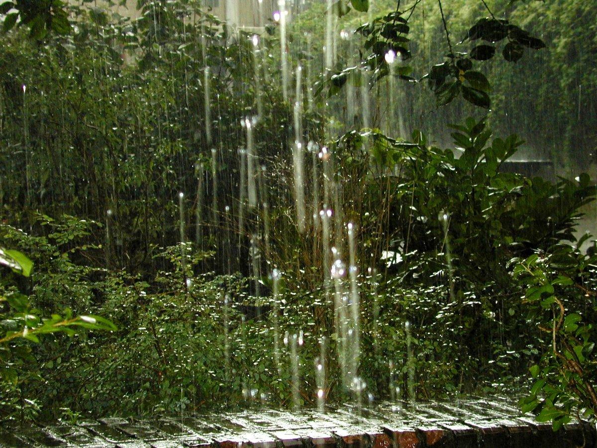 картинки на тему дождь в лесу сумки для бизнеса