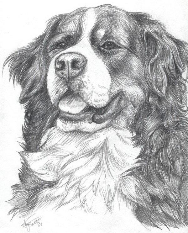 Нарисованные картинки собак карандашом, марта