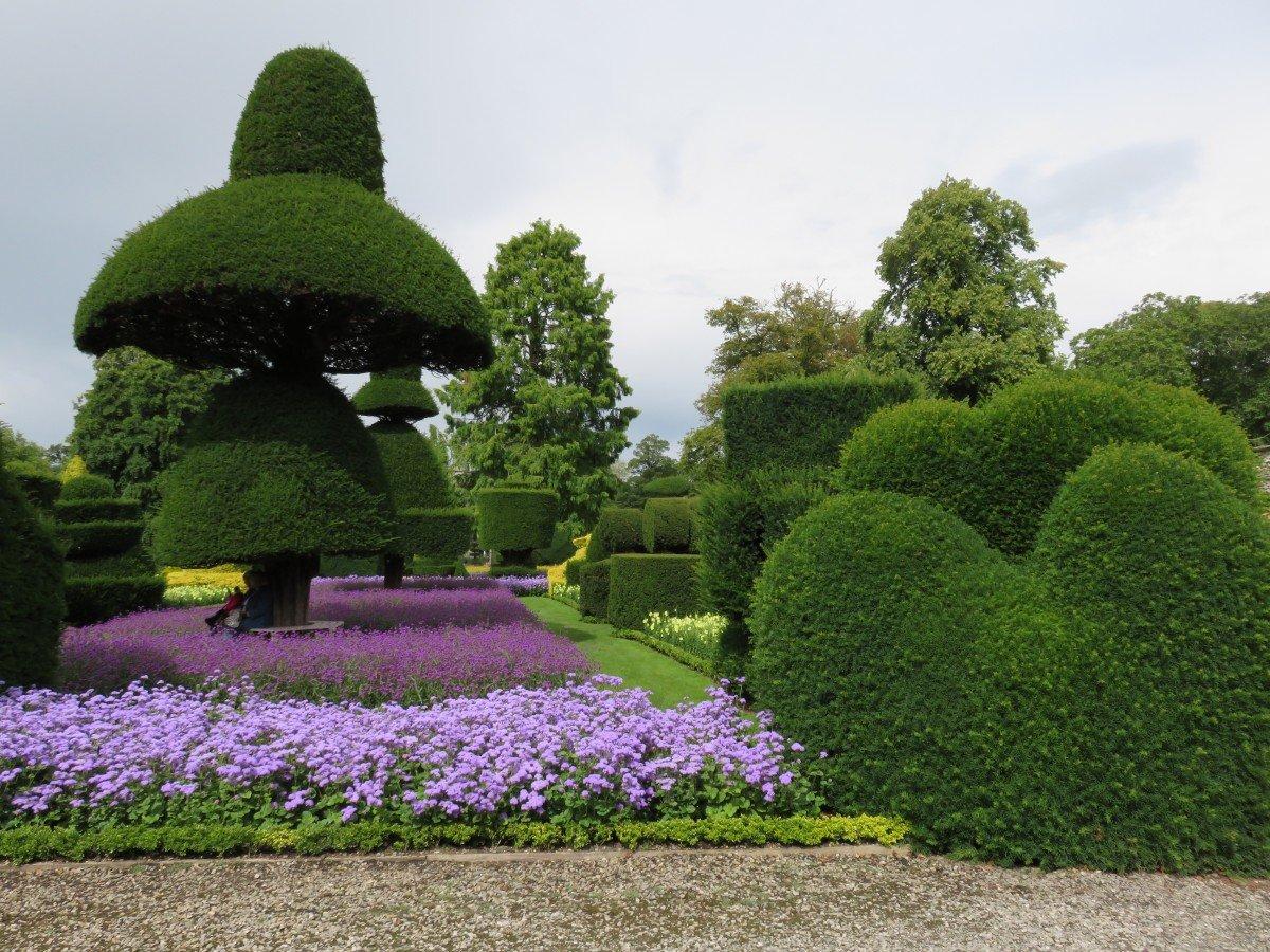 ним стрижка растений в саду фото воскресной