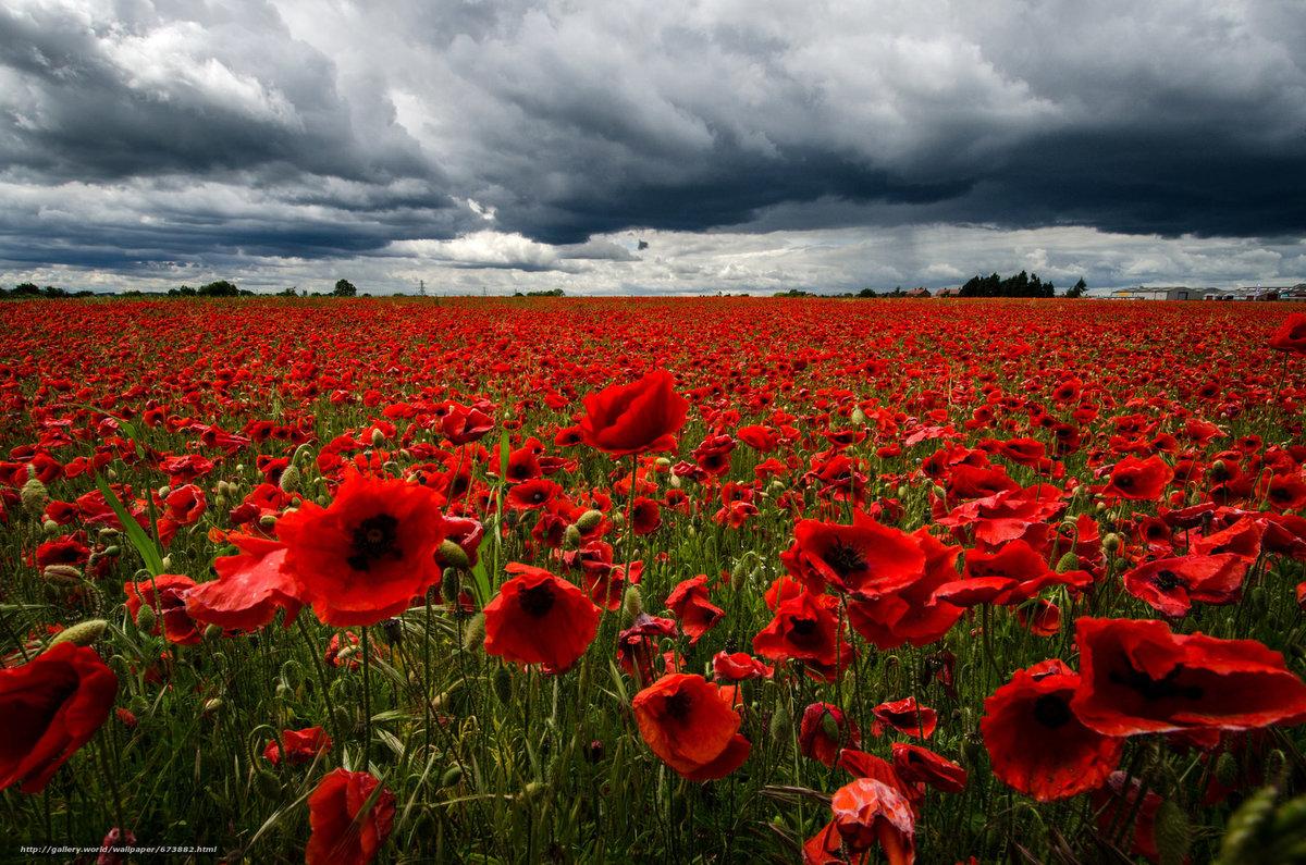 при высокой картинки с полем красными цветами и дорогой цветовую гамму фотообоев