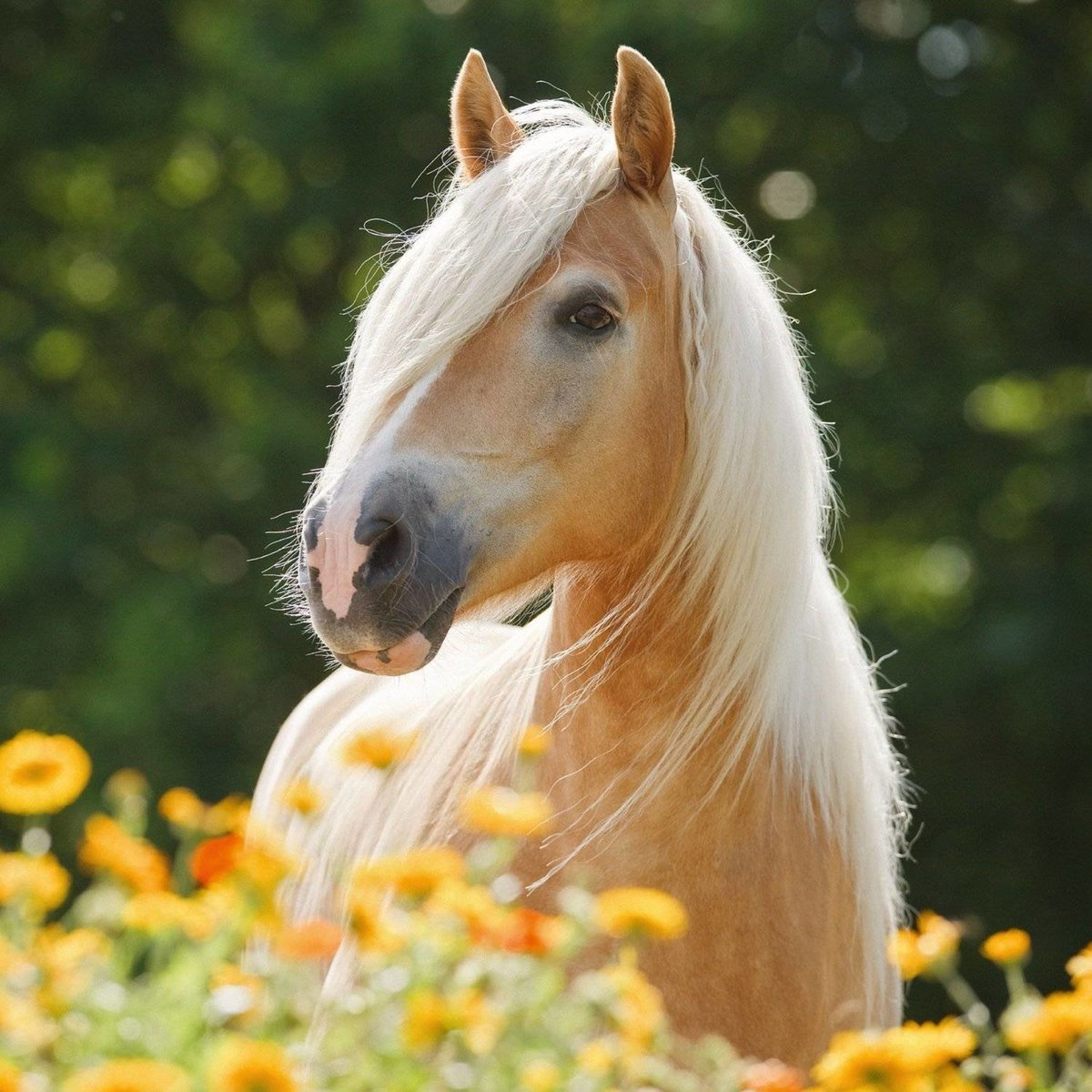 Красивые картинки кони лошади