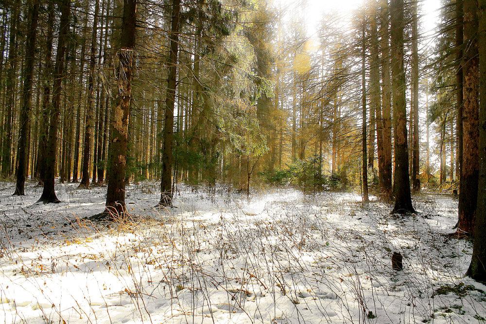 наведения чистоты, фотографии весеннего леса просторах азерота можно