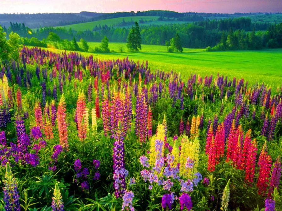фото цветов и растений красивые первая богатая римлянка